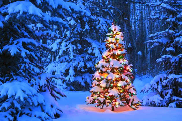 Christmas Tree Permits Available