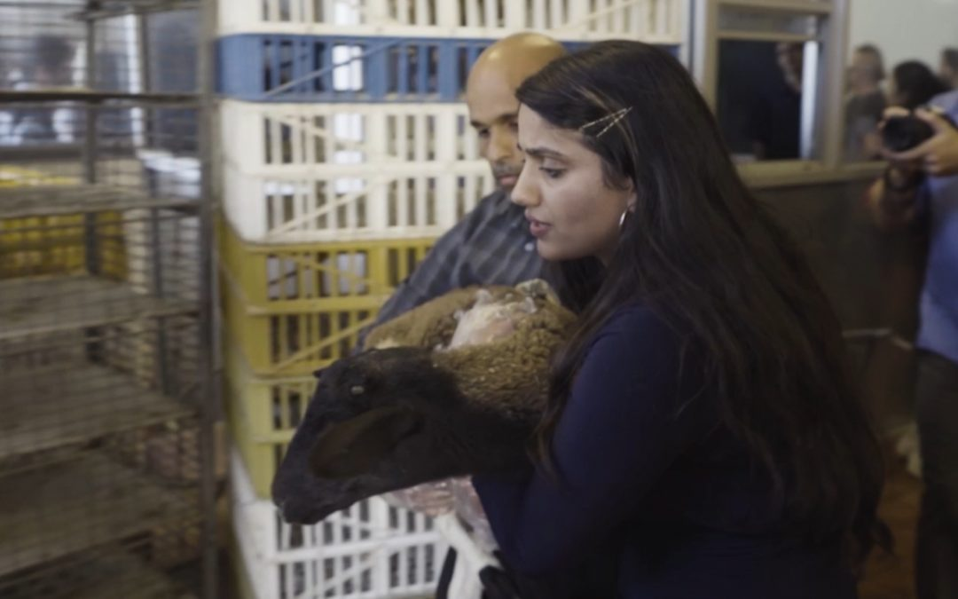 RESCUE AT OAKLAND SLAUGHTERHOUSE SHOWS NEW, POTENT TACTICS OF GROWING ANIMAL RIGHTS MOVEMENT