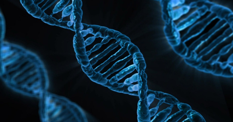 POLICE CAN REQUEST YOUR DNA WITHOUT CONSENT VIA ANCESTRY WEBSITES