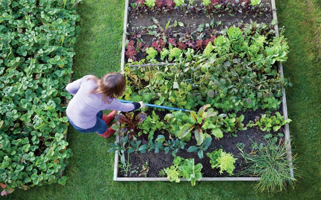 20 Easy-to-grow crops you can raise at home