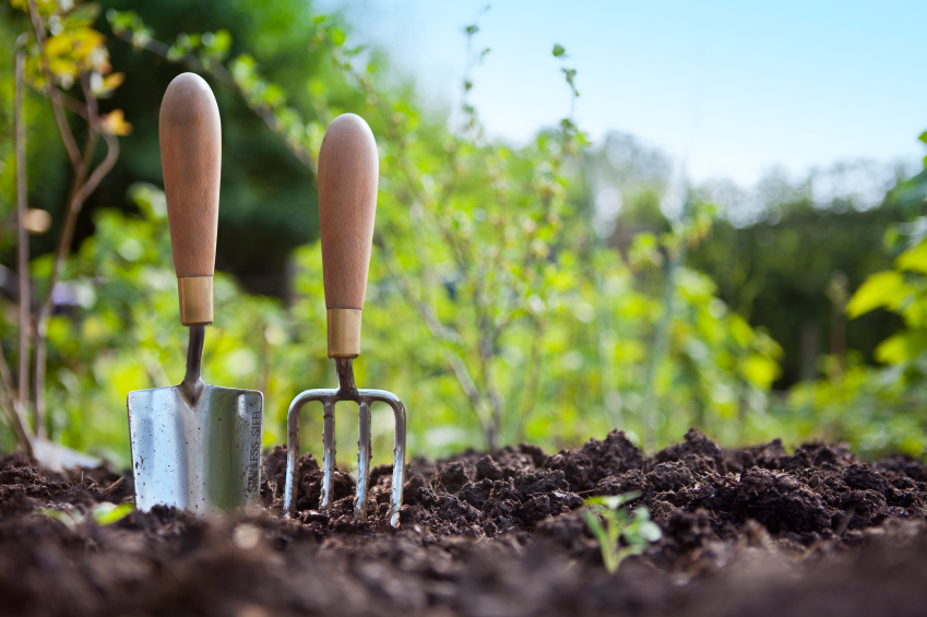 A beginner's guide to gardening: 10 Expert tips everyone must consider
