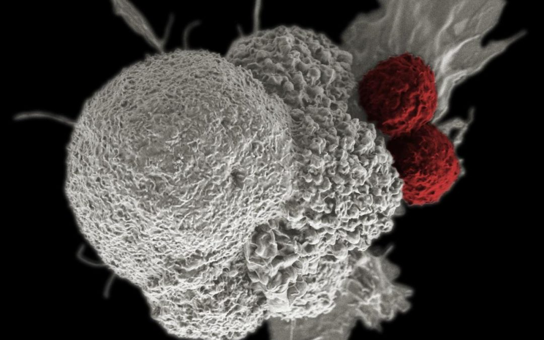 Biotech firms race to recruit good bugs in war on cancer
