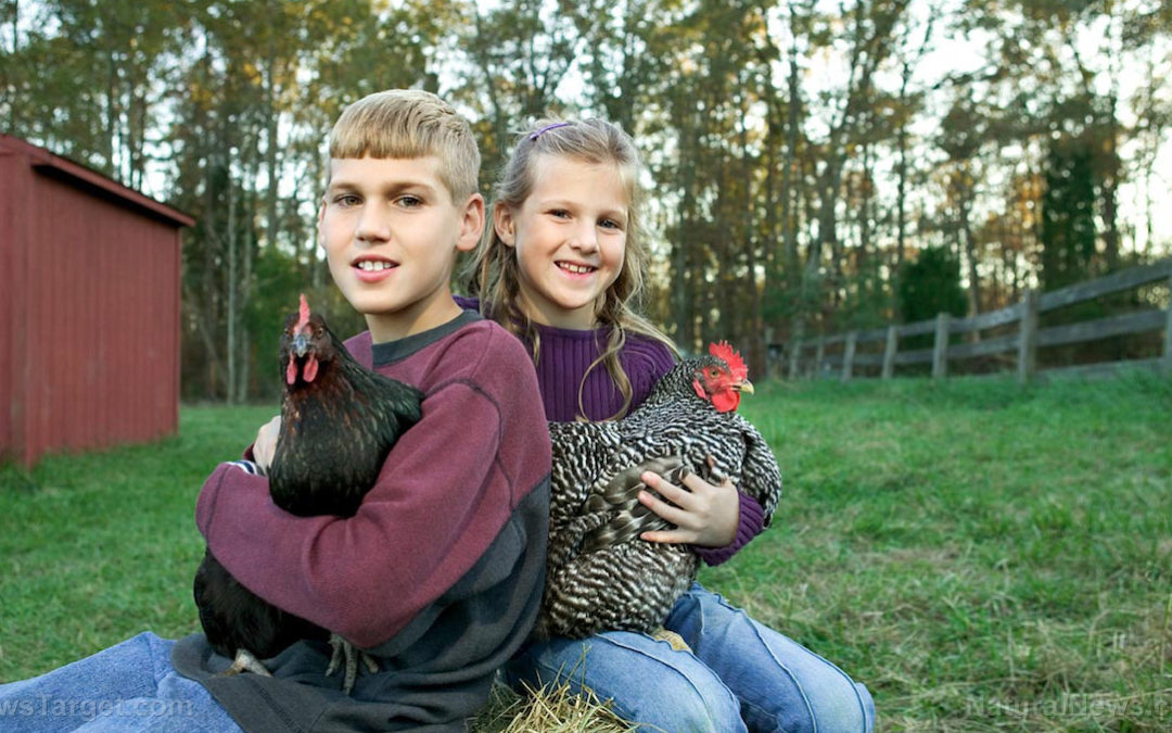 Beginner's Guide to Raising Chickens: Terms You Definitely Need to Know