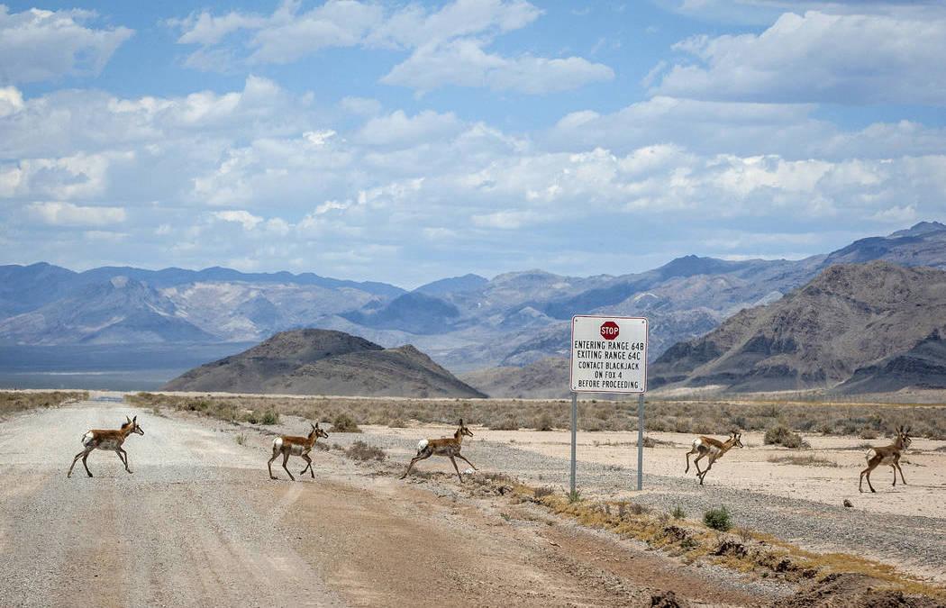 Air Force Plan to Expand Nevada Training Range Raises Concerns