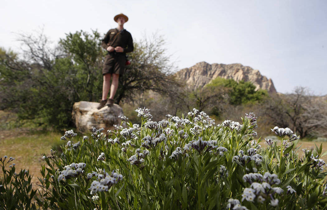 Looking for Mojave Wildflowers? Follow the Rainstorm Path