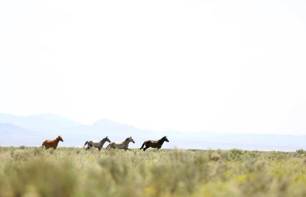 Animal Rights Groups Sue over Planned Wild Horse Roundup in Nevada