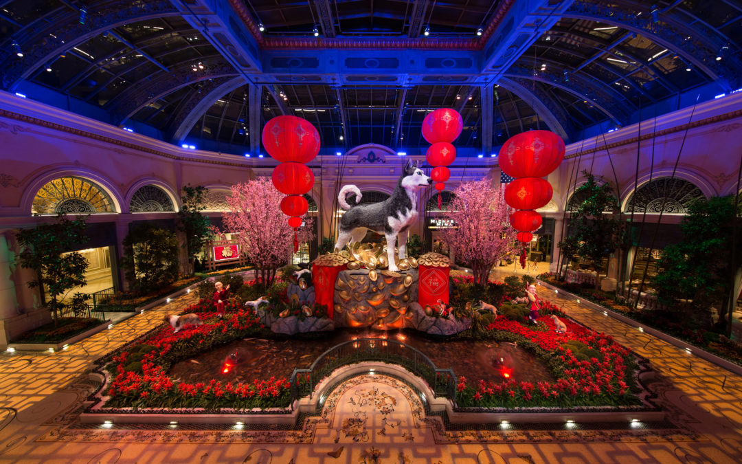 Bellagio's Conservatory & Botanical Gardens Honors Lunar New Year with Year of the Dog Floral Display