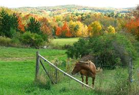 Central Catskills Chamber of Commerce Fall Events  Sept. thru October