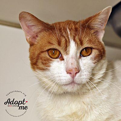 "Humane Society of Wayne County ""pets of the Week"""