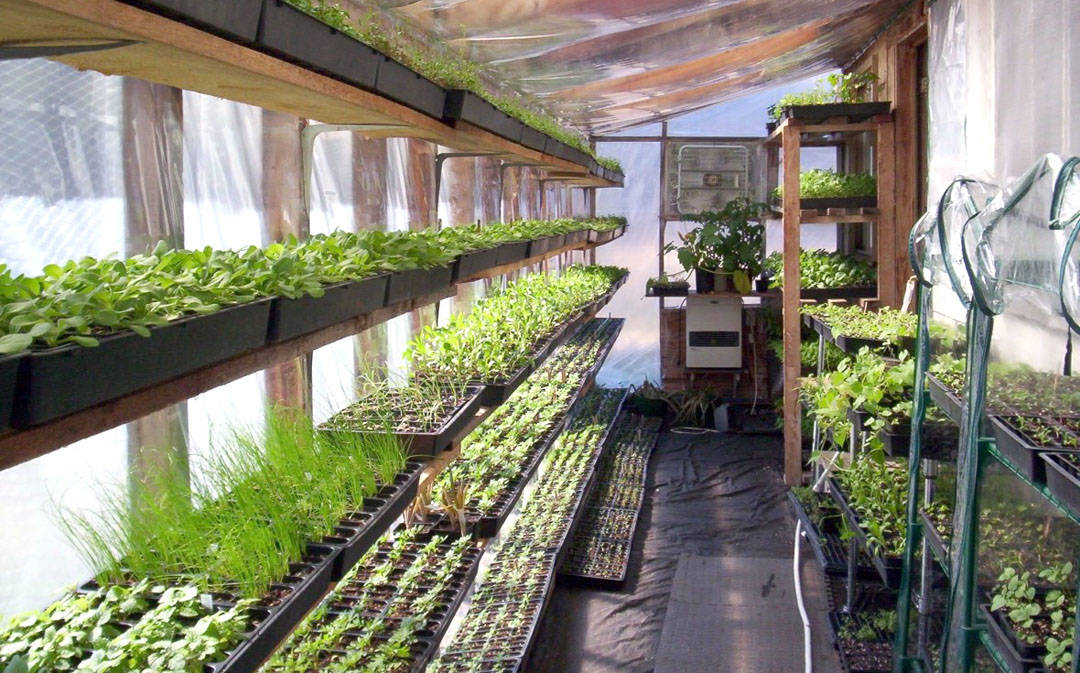 Walipini Greenhouse: What It is, Why You Need One, and How to Build It