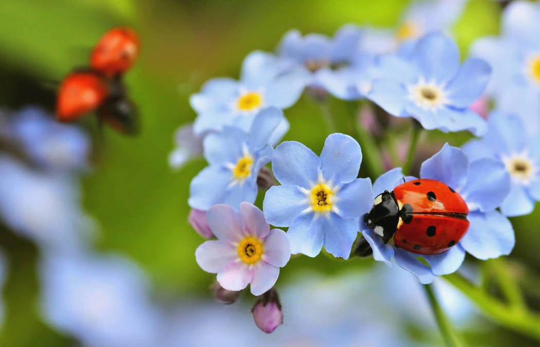 Star Nursery is giving away free ladybugs on Saturday