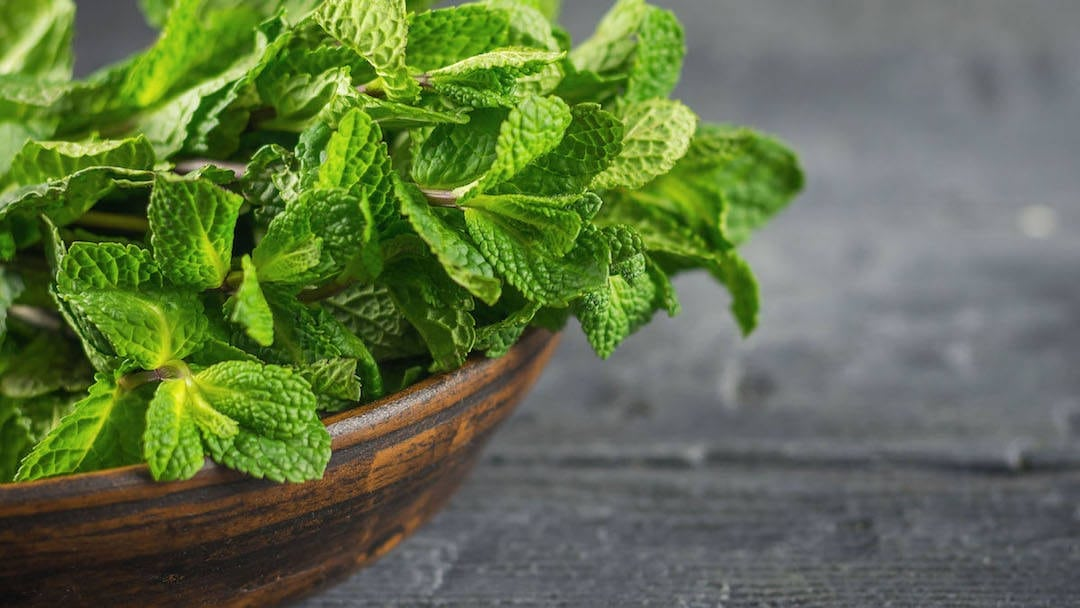 Get a brain boost from spearmint: It improves both short term memory and ability to fall asleep, according to study