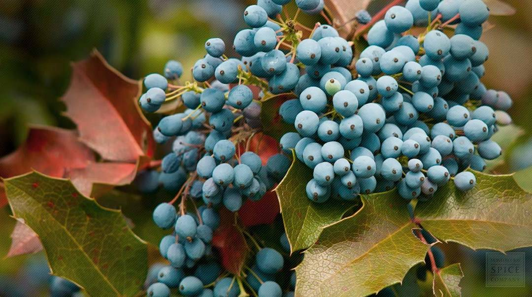 Oregon grape extract: A natural treatment for psoriasis