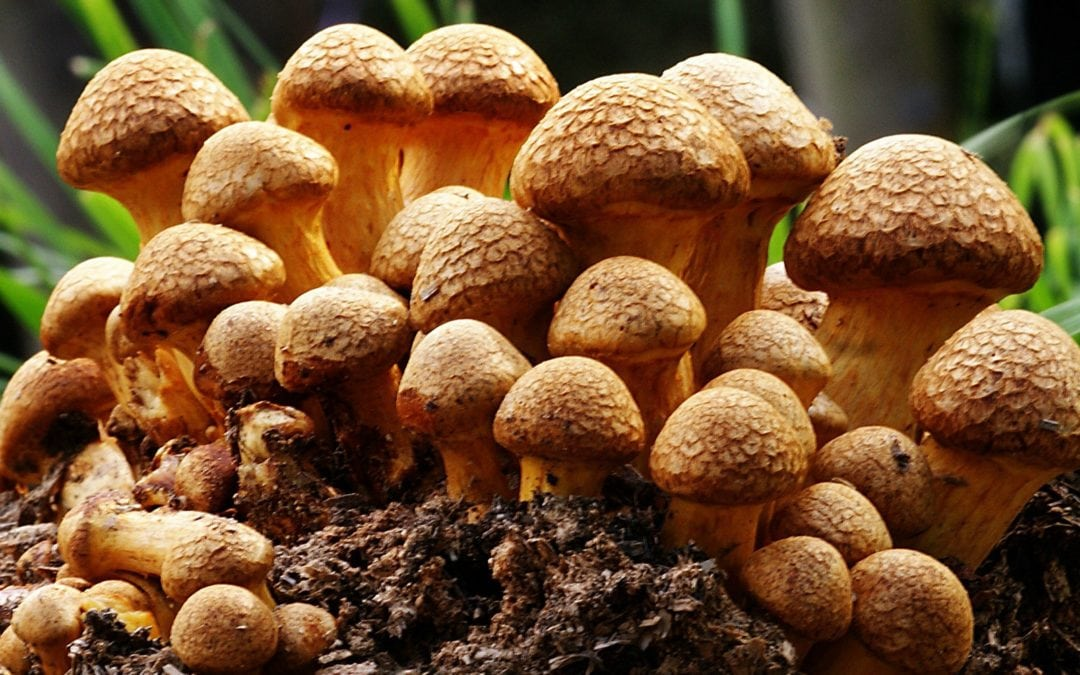 Mushroom-based products could soon replace leather, cloth, and even bricks