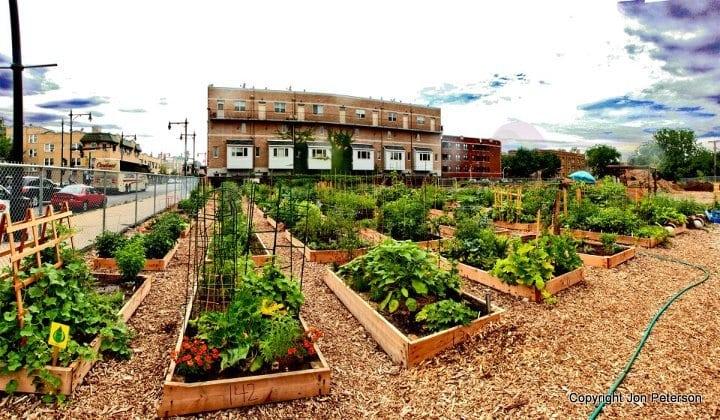 Community gardens: Why urbanites are building these gardening plots