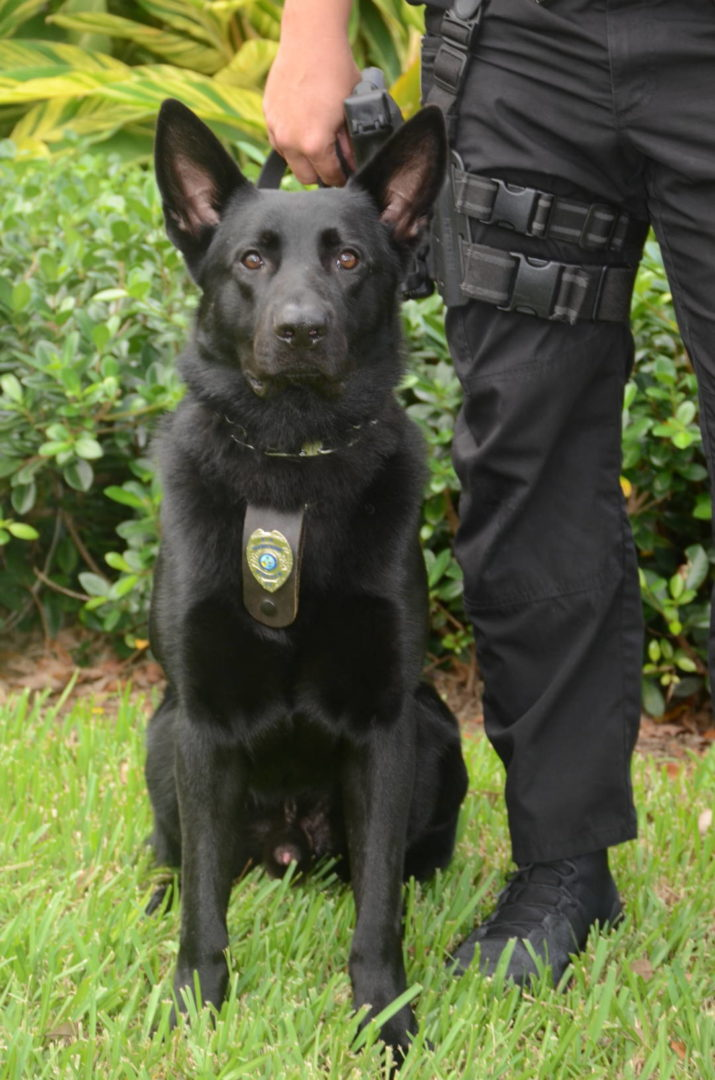 Palm Beach Gardens Police K-9\'S Dexter, Kastor, Justice & Valco ...