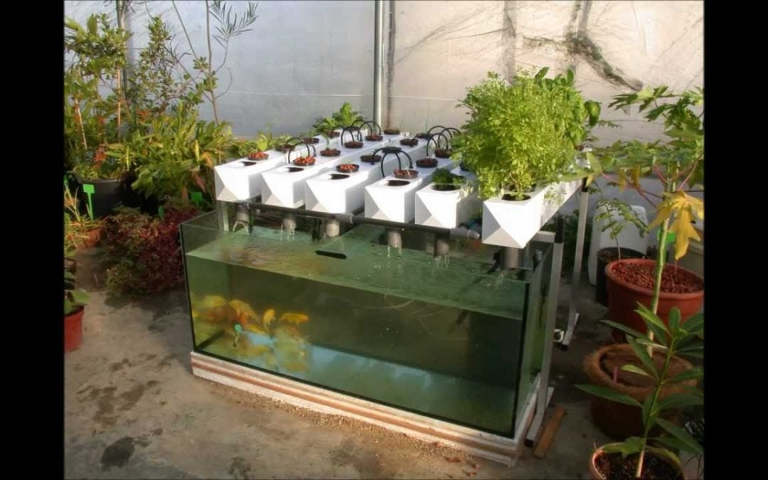 7 Reasons why you should start building an aquaponics garden now