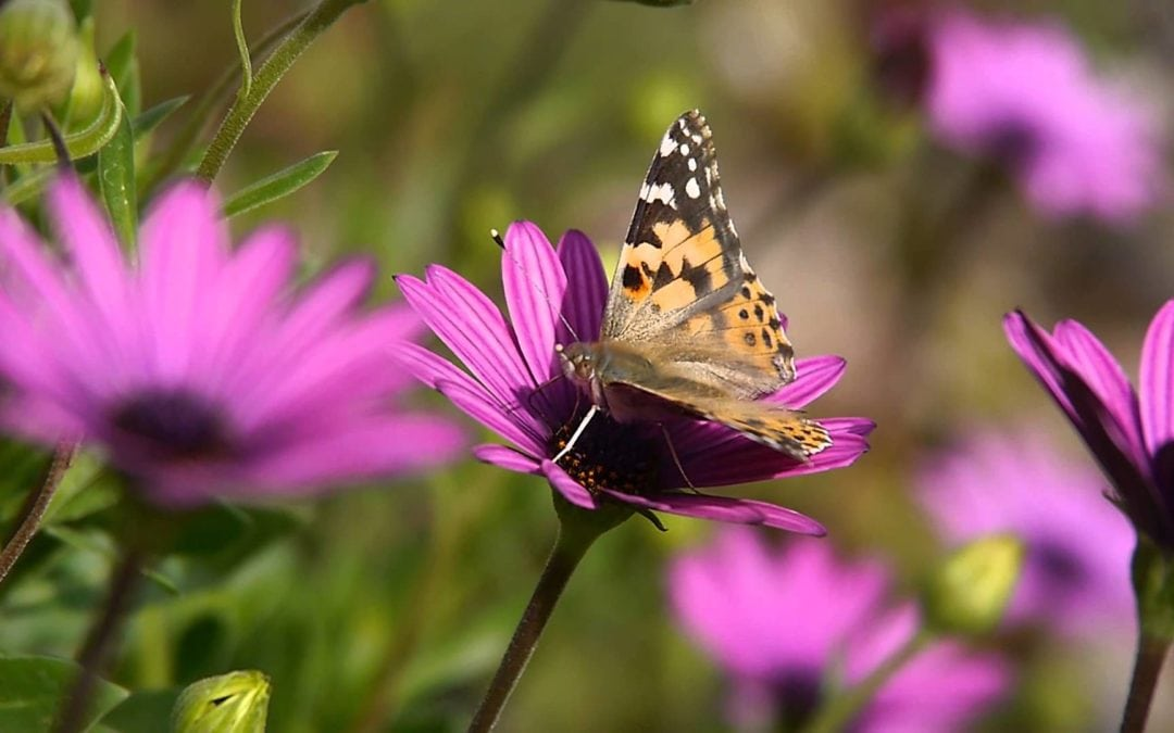 A simple guide to creating a pollinator-friendly garden