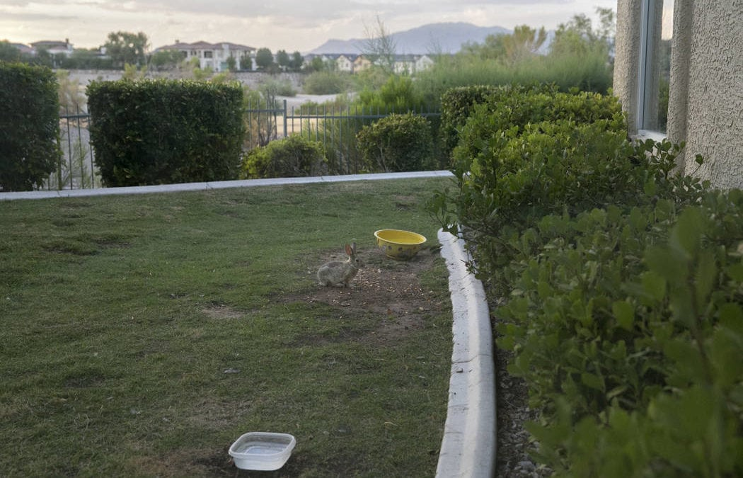 Southern Nevada water agency ups incentive to get rid of lawns
