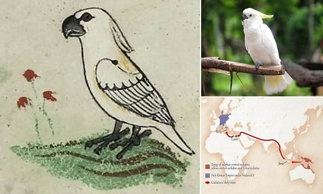 700-year-old Vatican drawing of Australian bird rewrites medieval trade route history