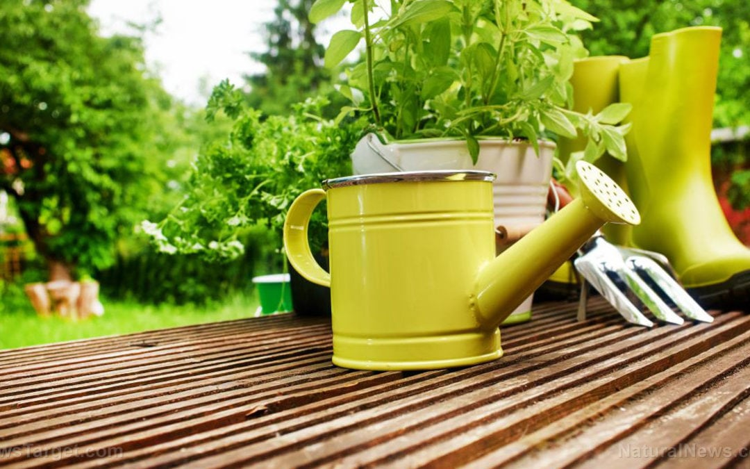 Tight space? No problem: 7 secrets to get the most out of your vegetable garden