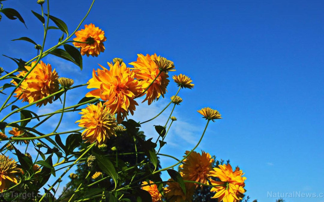 Edible or poisonous? Tips on how to determine which wild plants are safe to consume