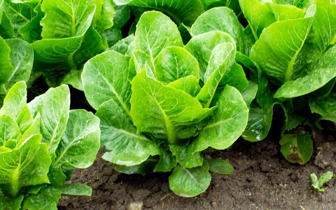 7 Trouble-free vegetables to grow for newbie gardeners