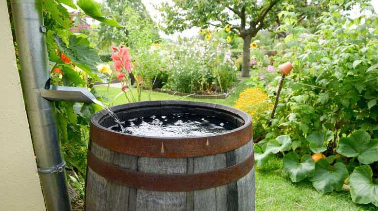 A how-to guide to harvesting rainwater