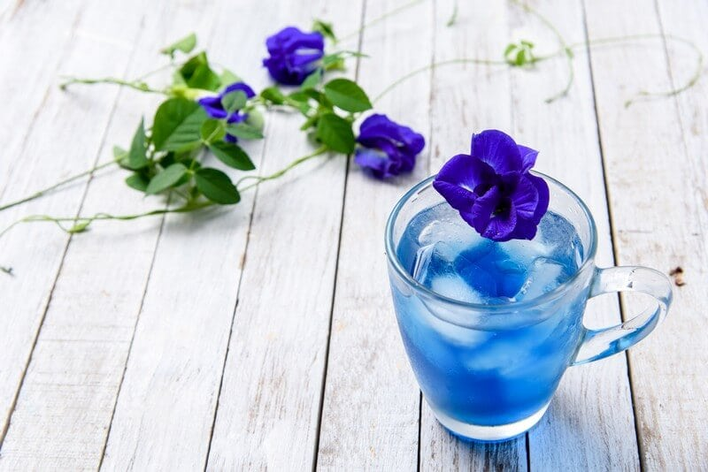 https://yournews.com/wp-content/uploads/2018/07/bluechai-fresh-butterfly-pea-flowers.jpg