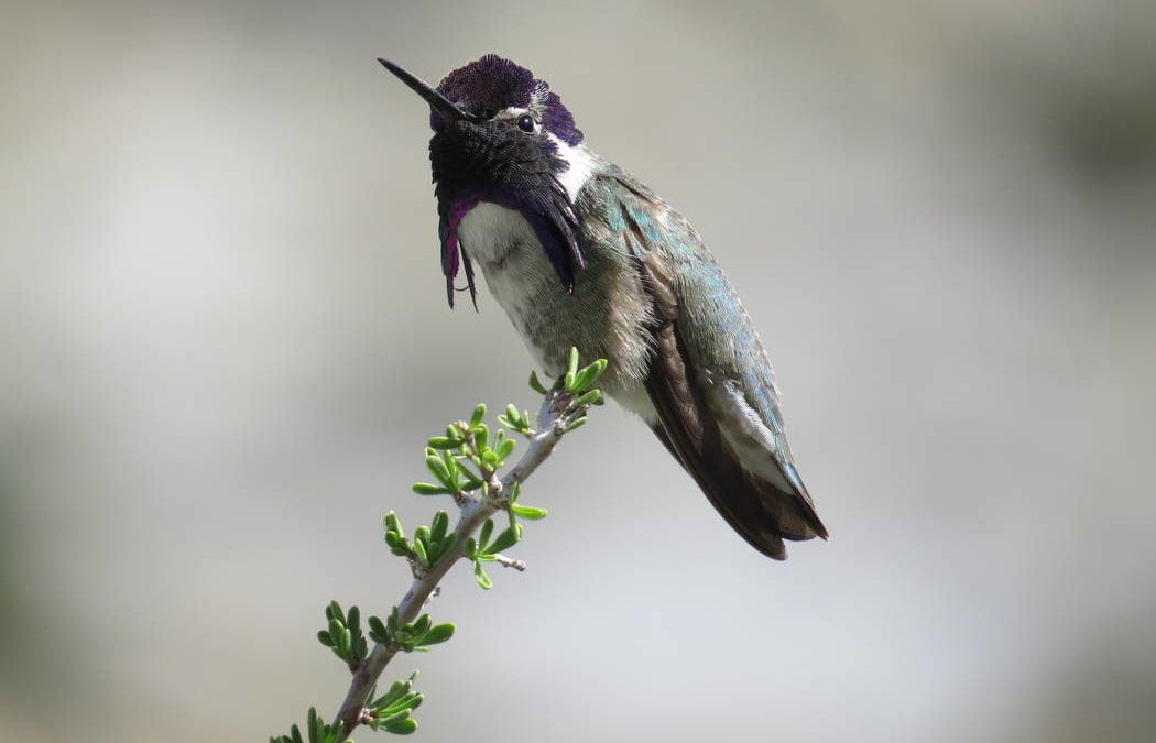 Nevada-California desert 'half empty' of birds after population collapse