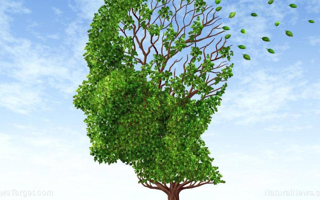 One of nature's best kept secrets: Elya leaves reduce brain damage linked to Alzheimer's