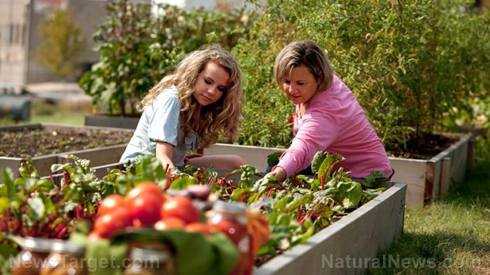 Built from scratch: Expert's smart advice about vegetable gardening