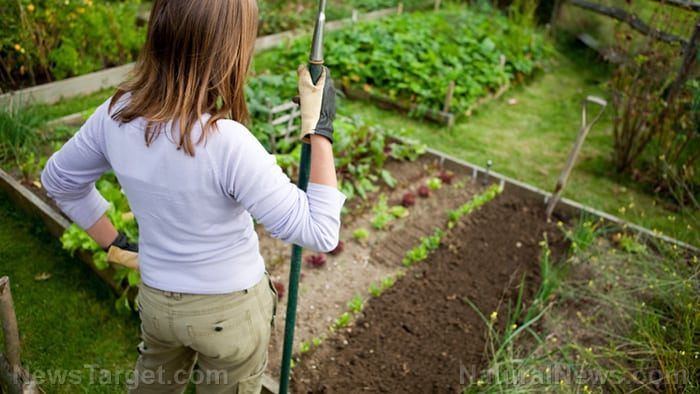 Stay vigilant: These garden pests can wipe out your plants in a hurry