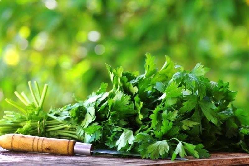Coriander oil is a safe and effective way to treat MRSA superbug infections