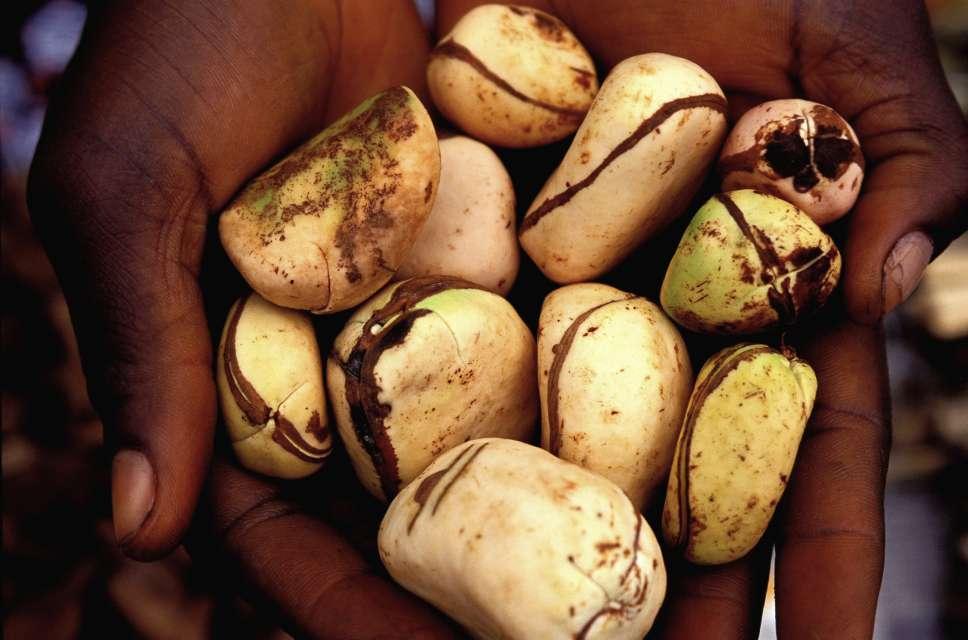Garlic and bitter kola found to be effective at treating