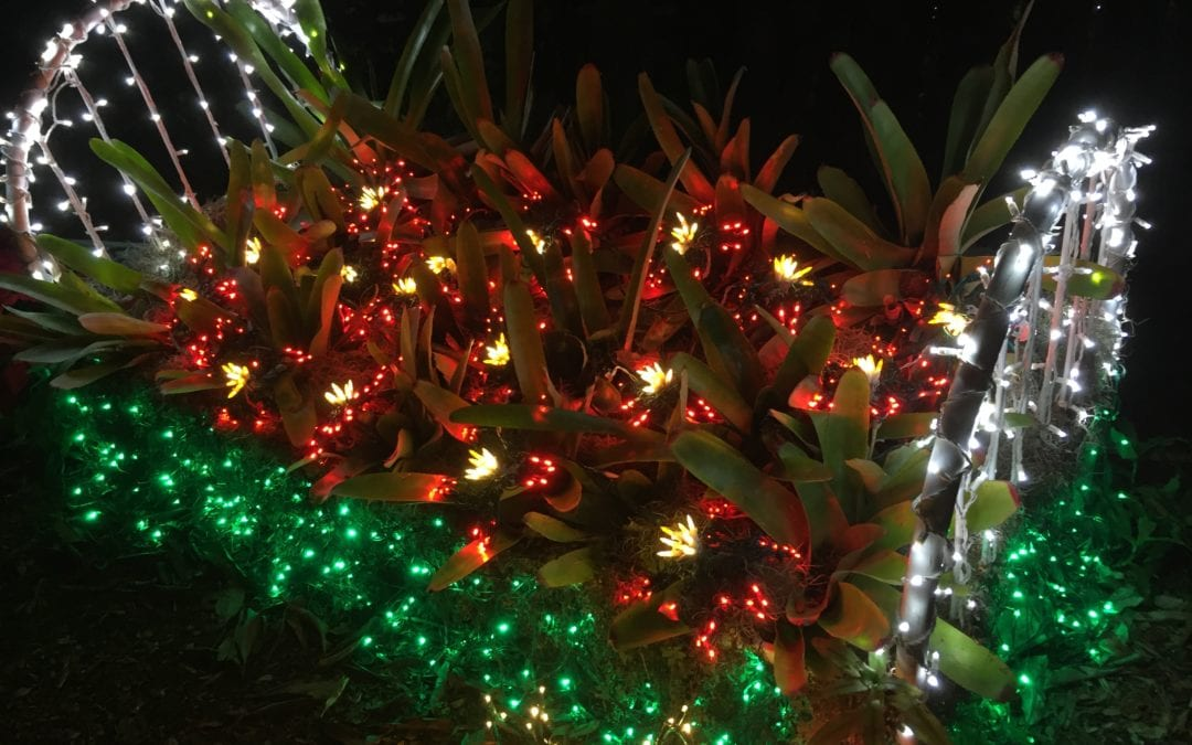 Top Five Reasons to Invite Your Family to St. Lucie for the Holidays