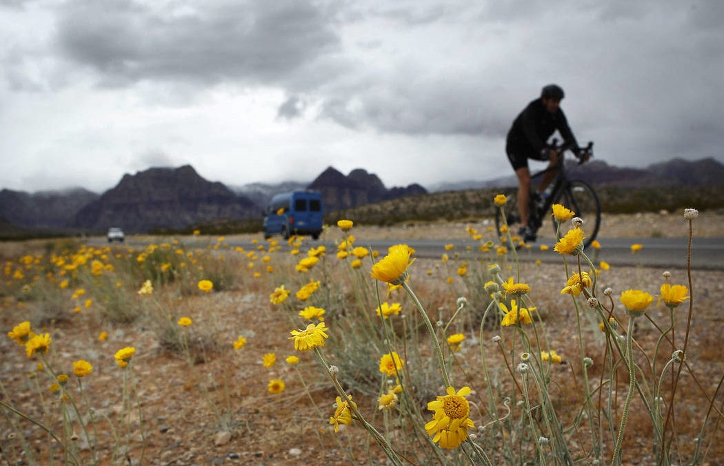 No 'superbloom' for Death Valley, but other areas will blaze with color