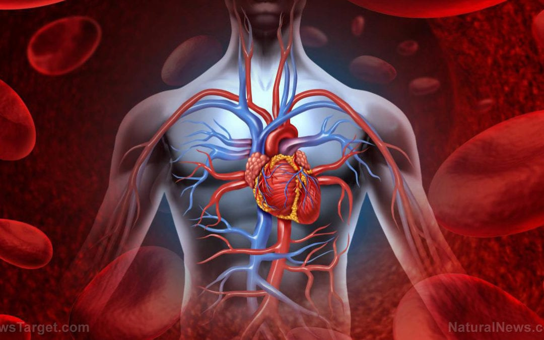 Heart attack sufferers can now regain heart function with transplanted muscle cells