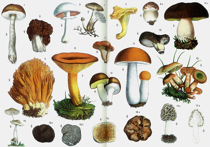 Unlock powerful healing benefits by consuming these medicinal mushrooms