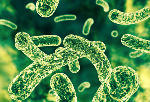 Good bacteria modify our immune response by changing existing gut flora