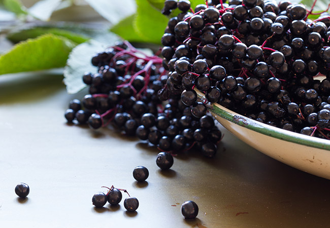 Elderberry supplementation found to reduce symptoms and severity of colds in air travelers