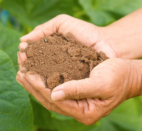 Simple Steps to Healthy Soil workshop Sept. 4