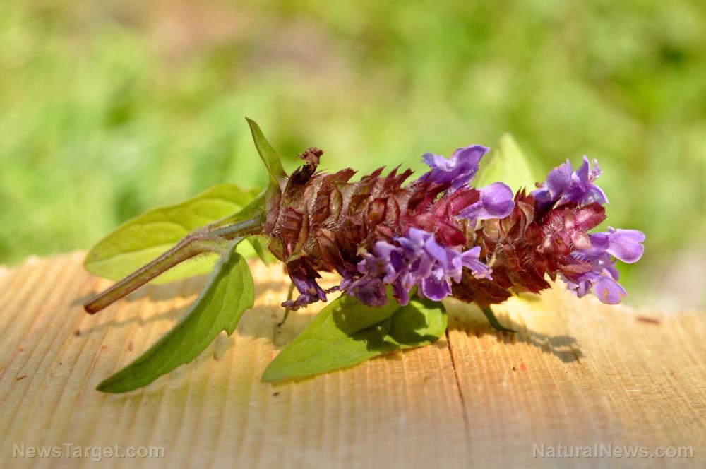 Self-heal herb improves symptoms of diabetic nephropathy
