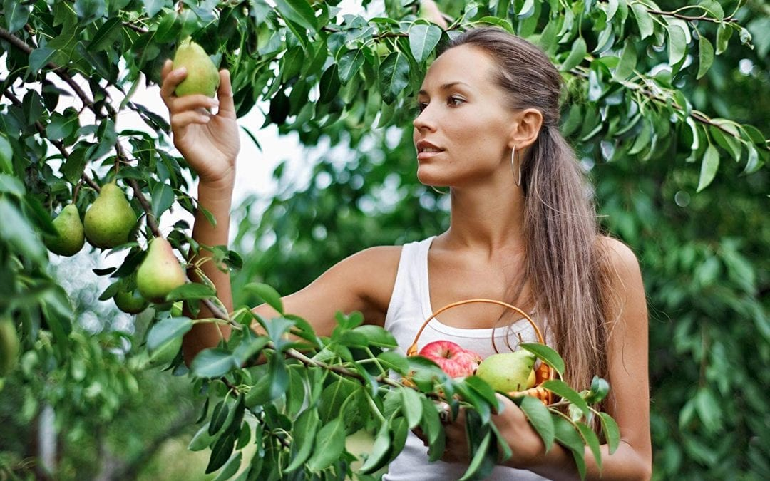 It's time you grew your own fruit-bearing trees for food – here's how