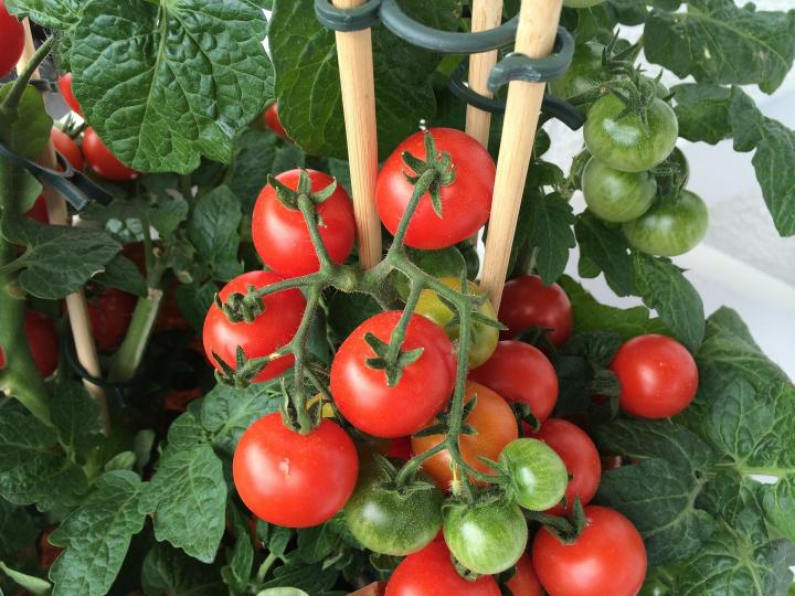 You don't need an outdoor garden for these 6 vegetables