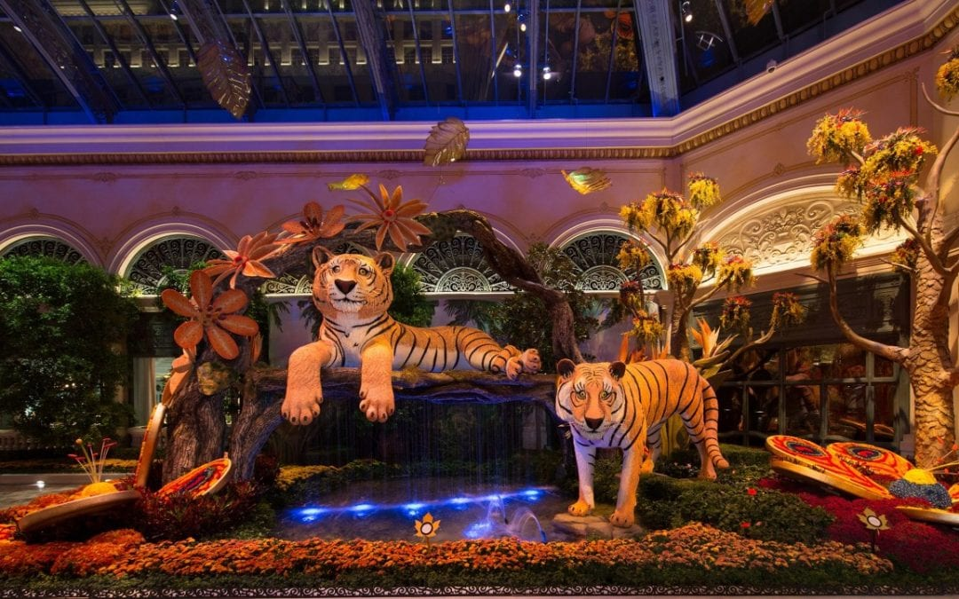 'Indian Summer' display opens at Bellagio conservatory