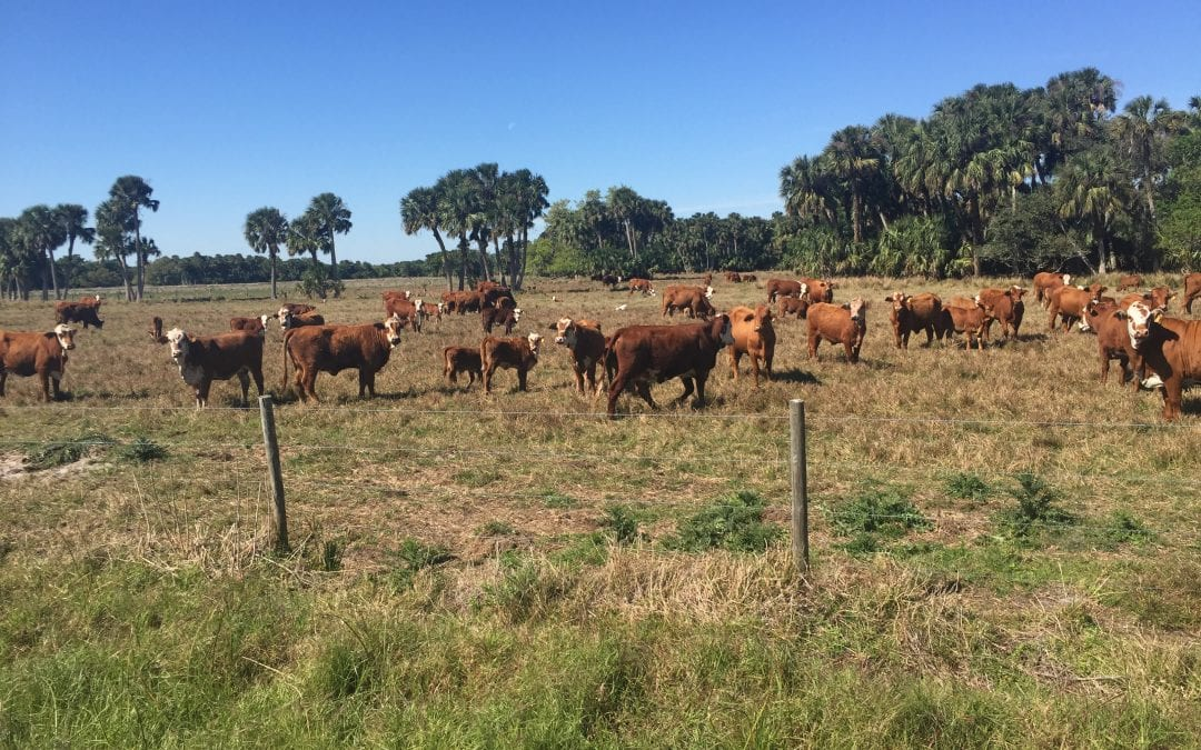Friends of the St. Lucie Library Host An Evening of Florida Ranching Nov. 9