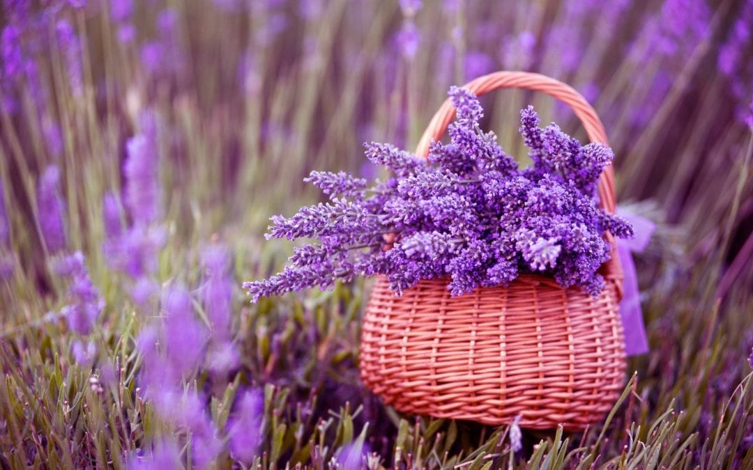 Natural bug repellent: 11 Herbs and flowers that deter mosquitoes