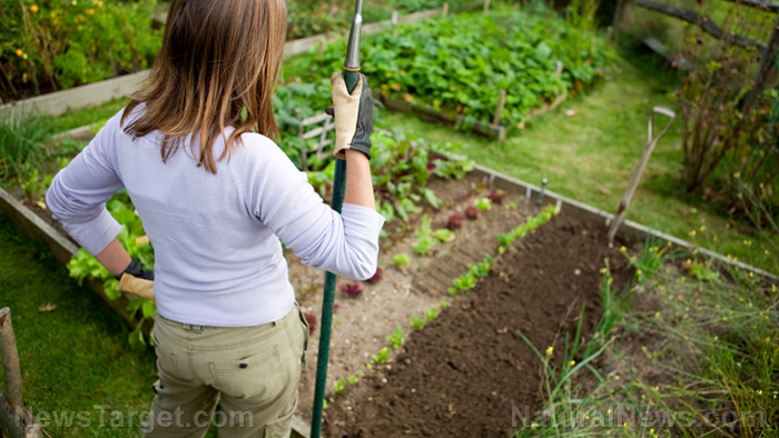 The revolution is in your back yard: Become self-sufficient and start a home garden