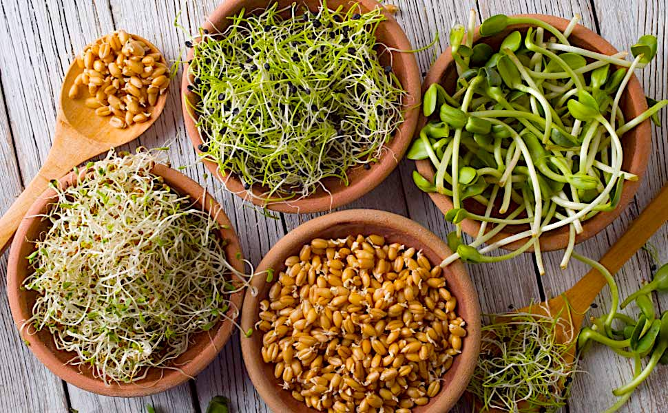 Eat your sprouts: They're packed with 100 healthy enzymes your body needs